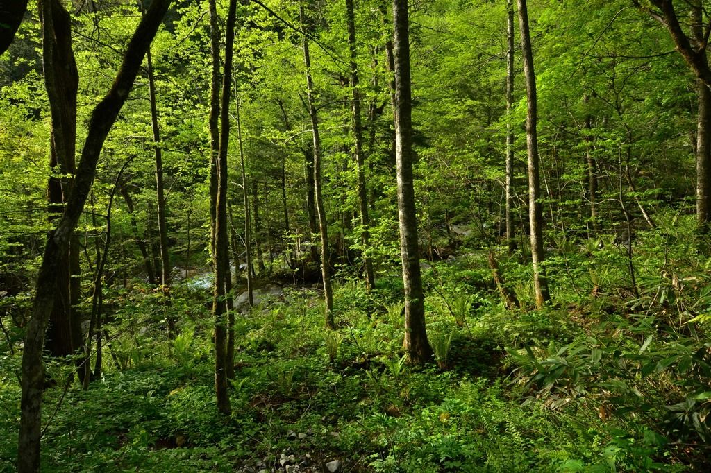 【不思議体験】森で首を吊る事にした