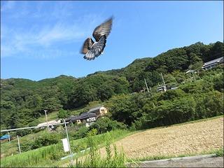 s-IMG_4122