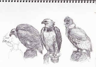 IMG3鳥の巣作ろう配布紙_0008 (320x224)