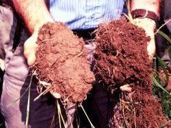 オーガニックな土壌