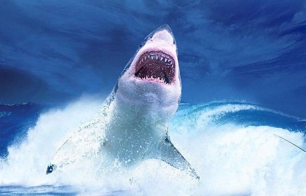 shark-2102330_1280