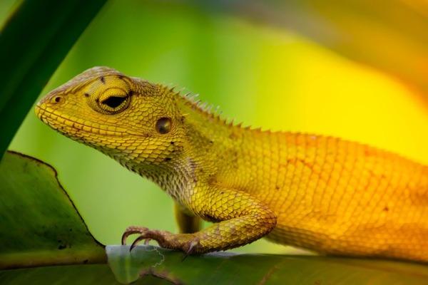 chameleon-4012987_1280