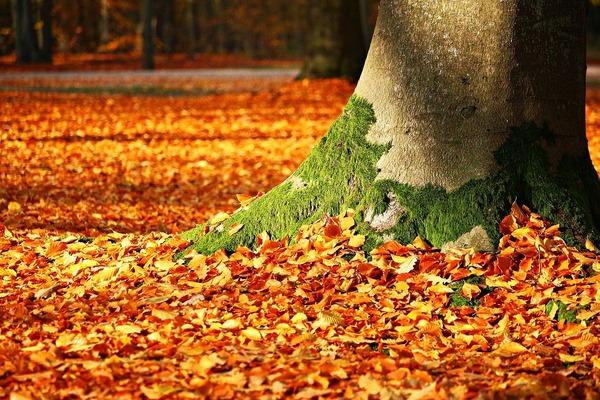 autumn-1913485_1280