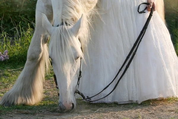 horse-3481756_1280