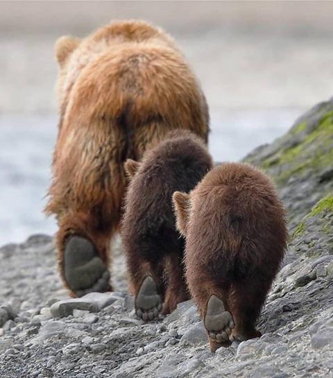 クマの後ろ脚の肉球