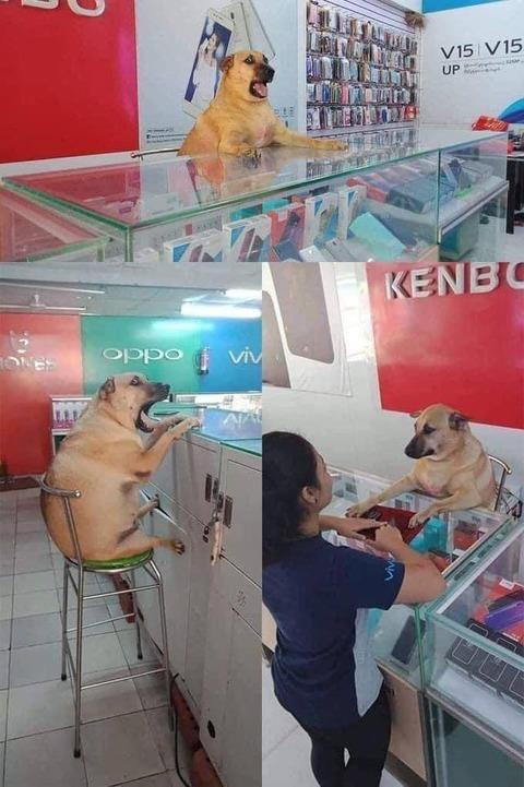 接客ができるイヌ。