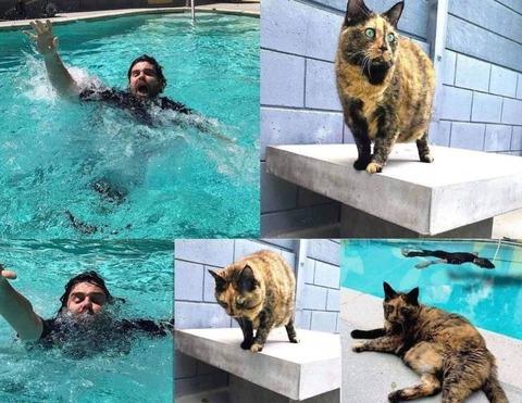 御主人様が溺れている時のネコの反応