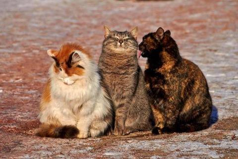 ネコの三兄弟