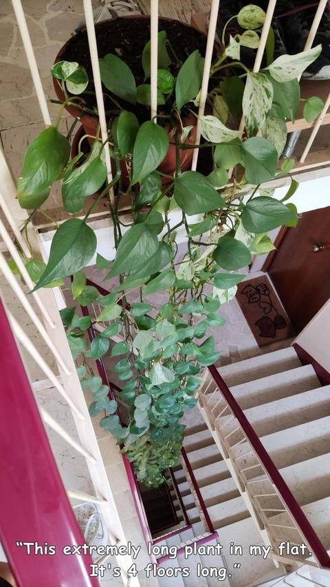 4階から1階まで垂れ下がる観葉植物のトポス