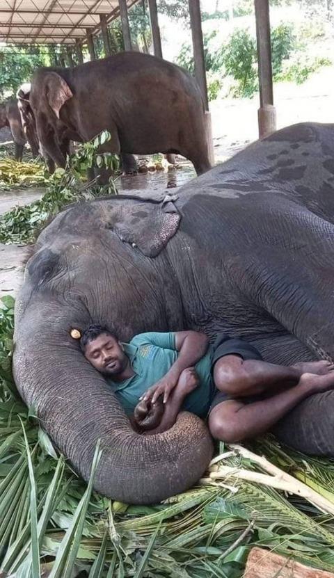 ゾウのベッドで寝る人の寝心地は…?