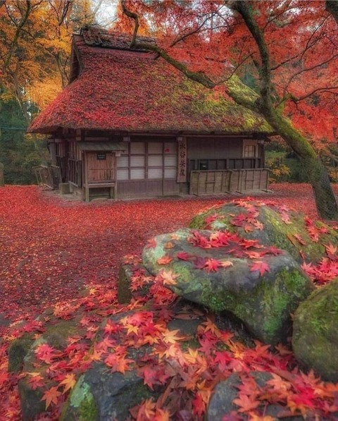 紅葉に覆われた日本の茶屋
