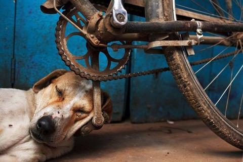自転車のペダルは犬にとってちょうど良い枕