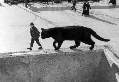 巨大なネコが人間を捕食
