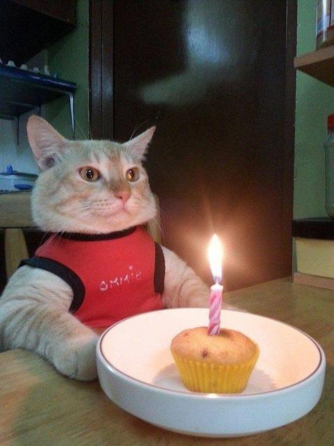 誕生日を嬉しく思うねこ