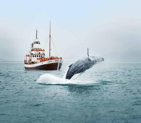 行く手を阻むクジラのジャンプ