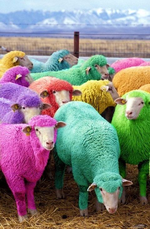 カラフルな羊