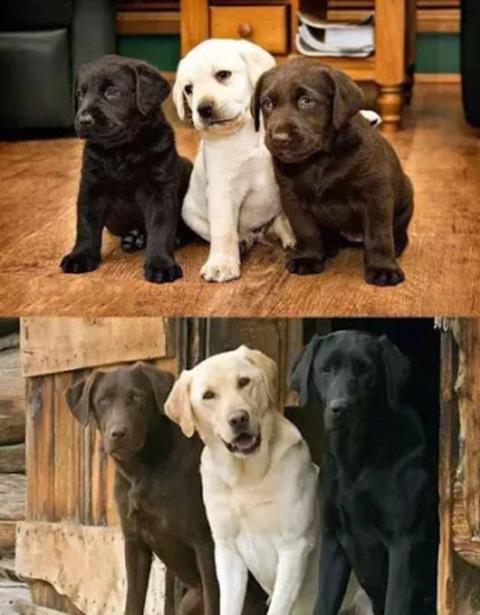 僕たち、こんな風になりましたイヌ。 (2)