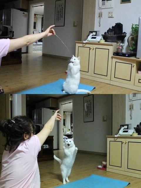 リアクションが一々可愛いネコ