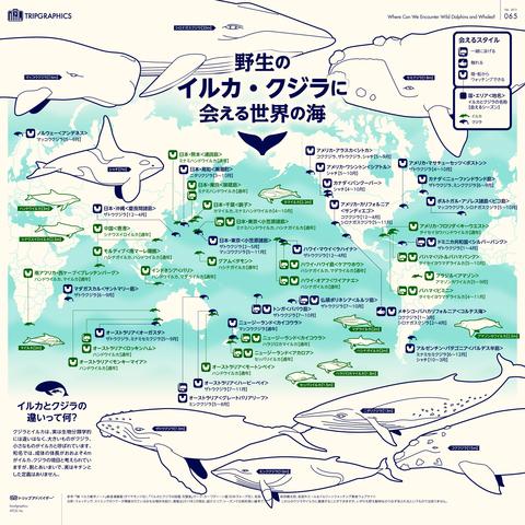 イルカやクジラに合える場所