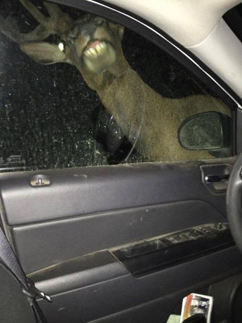 煽ってきた車にキレてイチャモンを付けてきたシカ