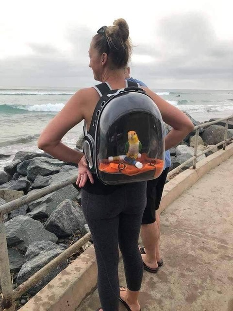 鳥と出かけるためのバッグのアイデア
