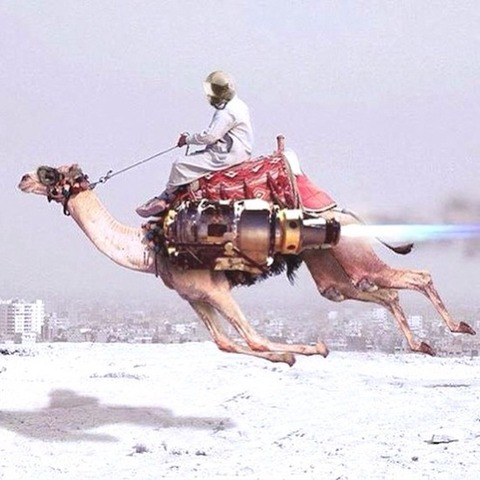 未来のラクダのレース