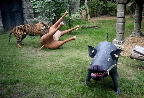 動物園の弱肉強食