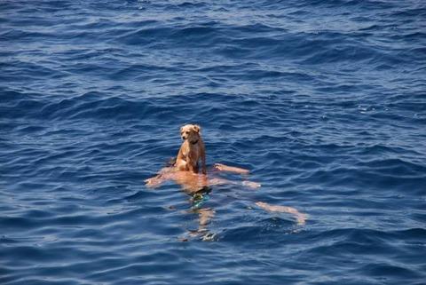 溺れていたので助けようとした御主人様が見当たらない。