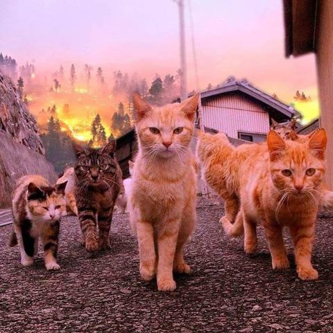ネコの出発