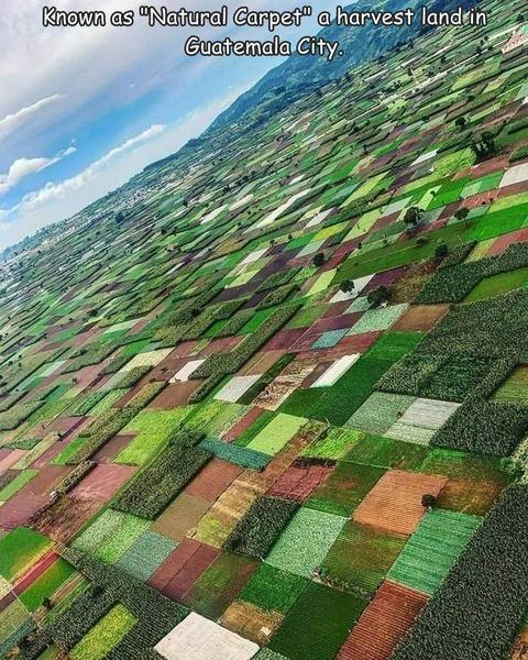 グアテマラの農場の空撮写真が凄いw!!