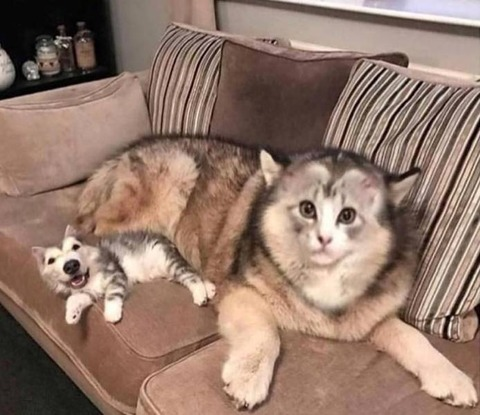 イヌとネコのフェイススワップ
