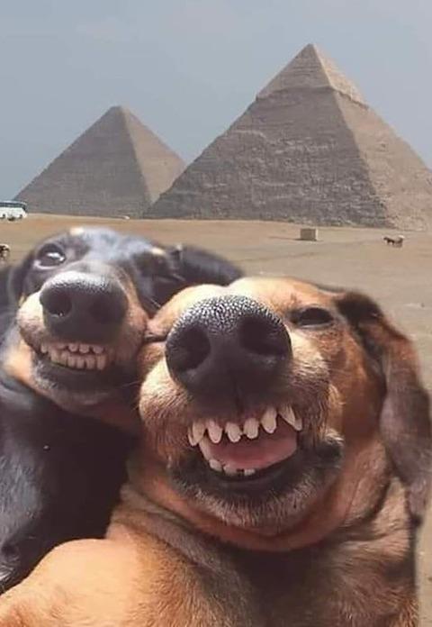 ピラミッド前で自撮りするイヌ