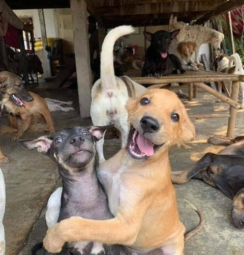 情報が多いイヌの写真