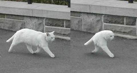 有名な「二本足のネコ」の元画像が見つかる!!