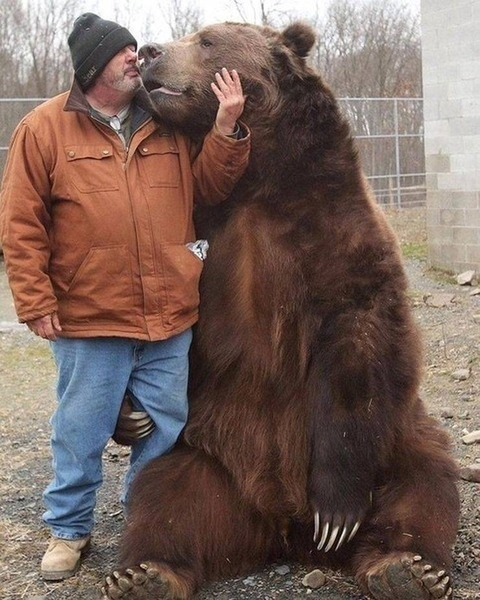リアルなクマのプーさんデカい。