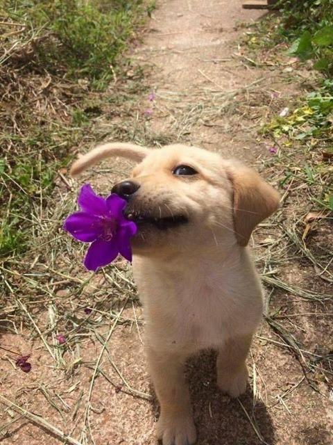 お花を持ってきました