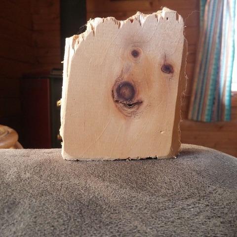 板状にされた犬