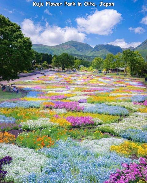 大分にある「くじゅう花公園」の景色が天国