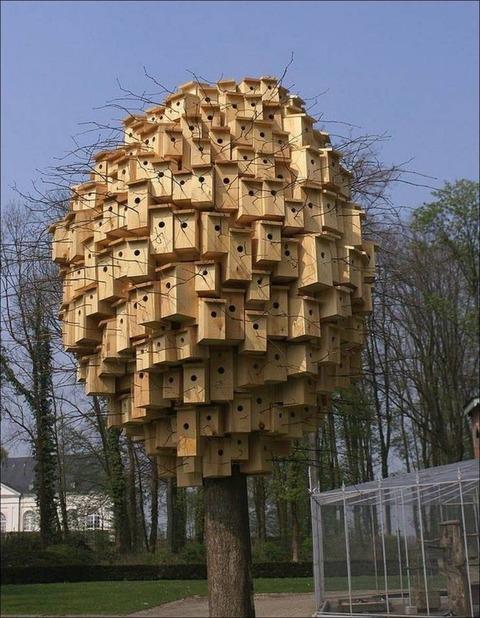 トリの住宅密集地