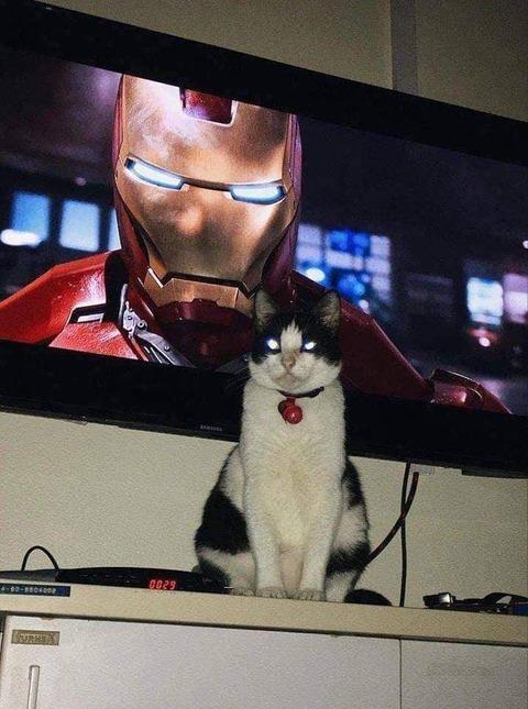 アイアンマンのマネをするネコ