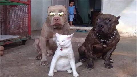 滅茶苦茶怖いボディガードを連れているネコ