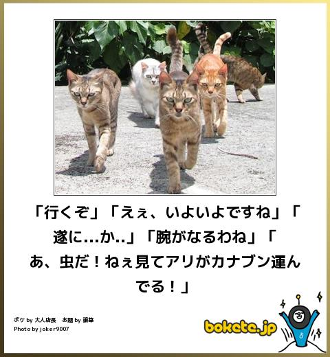 ネコとカナブン