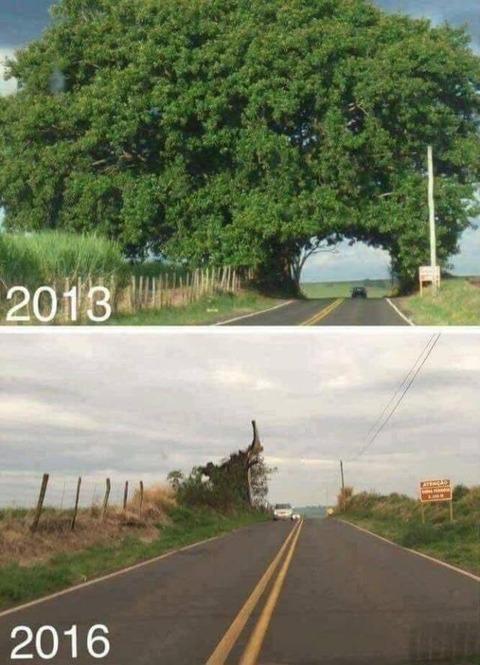 たった三年でこうなりました。街路樹
