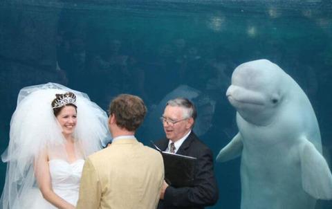 結婚式を神父と共に見守るベルーガ