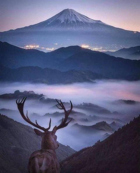 富士山を眺める牡鹿