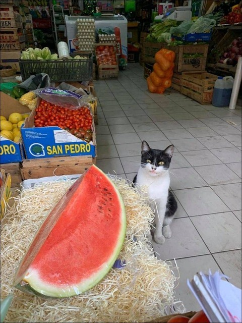 スイカを眺めるネコ