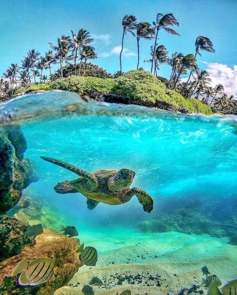 カメが居る楽園の画像