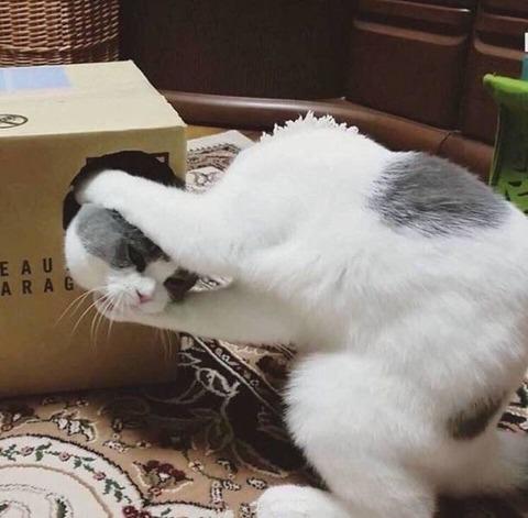 ネコの首がとれたのかと思った。