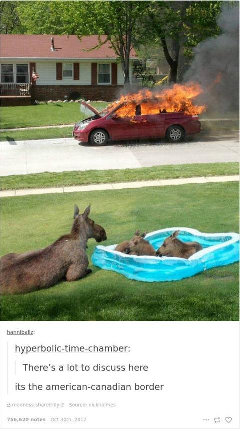 火が着いた車を見るムース