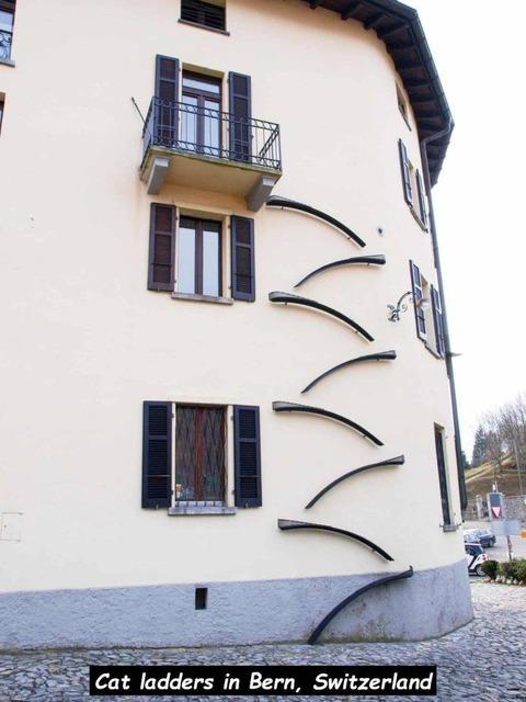 スイスのオシャレなネコ用階段